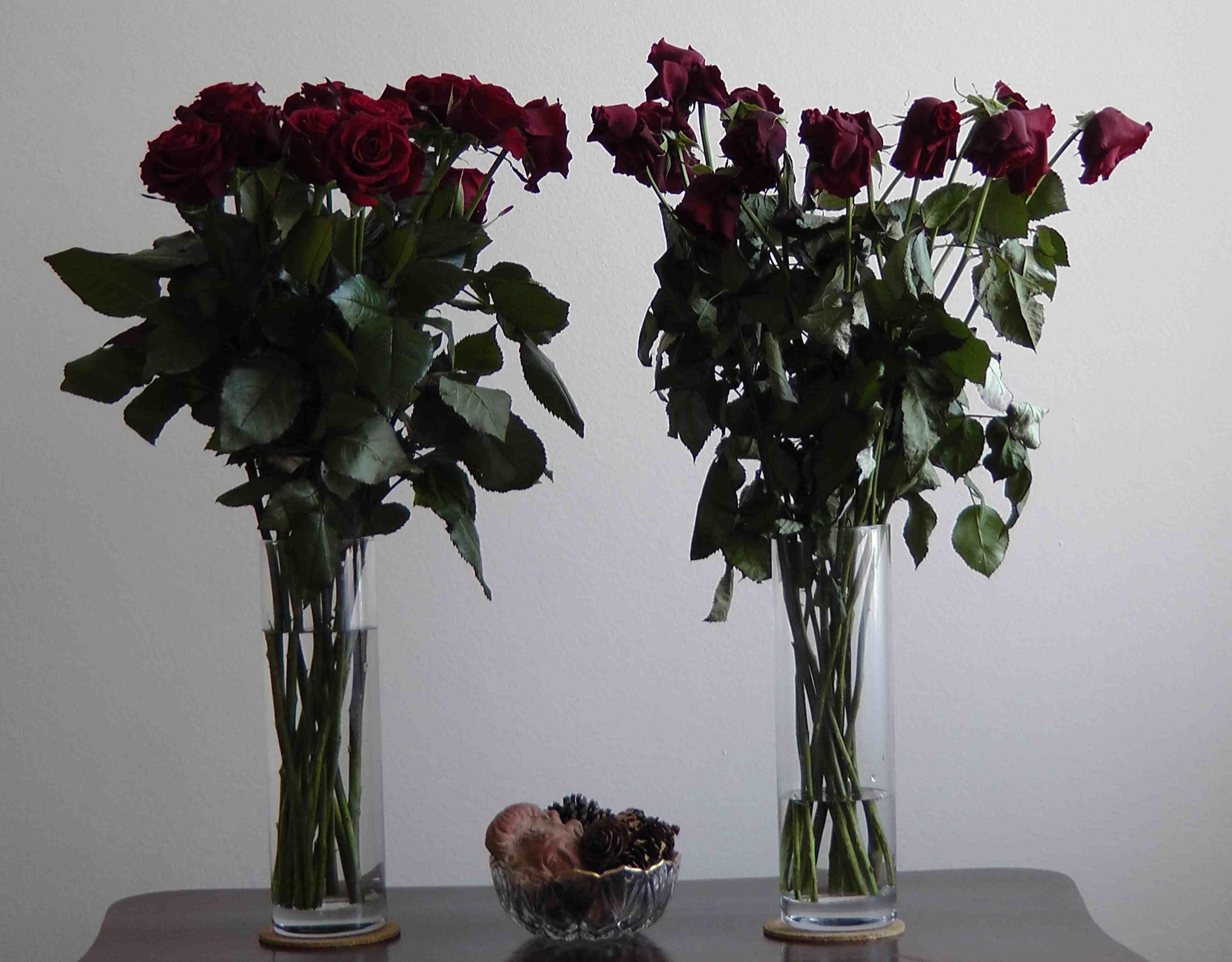 Roses privilégiées, Roses discriminées, #3, source : vagabondssanstreves.com
