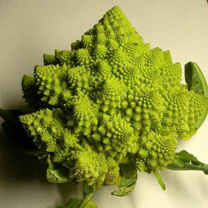 Chou Romanesco, fractale naturelle, Roger Prat, commons.wikimedia