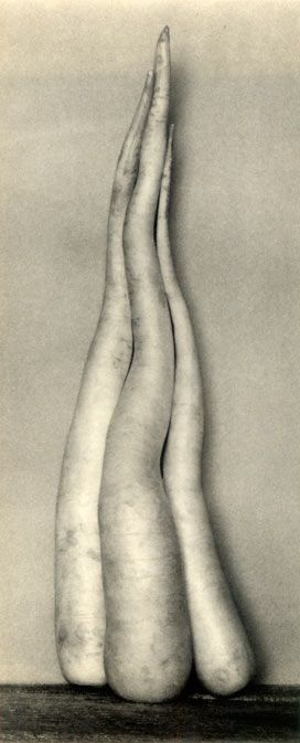 Edward Weston, White radishes