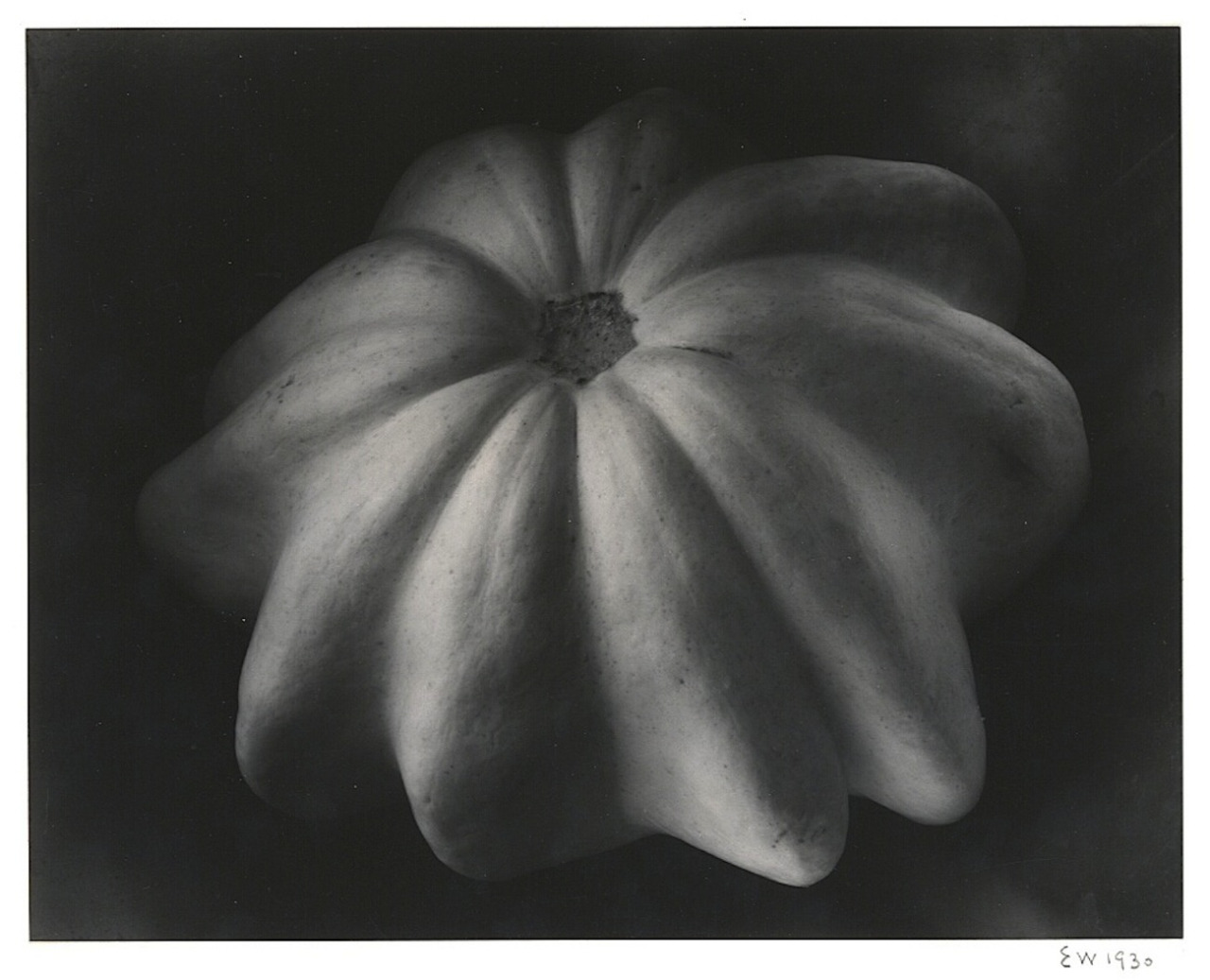 Edward Weston, Winter squash, 1930, artnet.com
