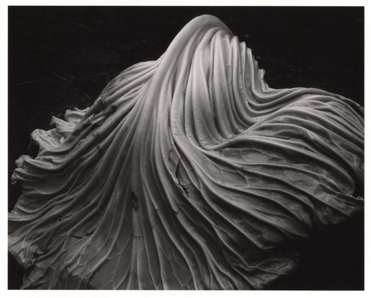 Edward Weston, Cabbage leaf, San Francisco Museum of Modern Art, sfmoma.org